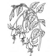Fuchsia Botanical Cling Rubber Stamp