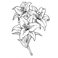 Oriental Lily Cling Rubber Stamp
