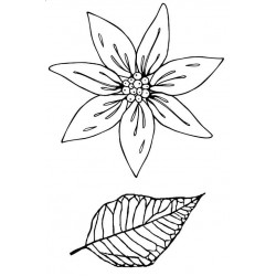 Poinsettia Duo Rubber Stamp Set