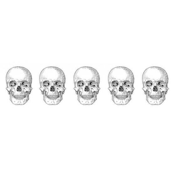 7064 Unmounted Rubber Stamp Skull Border