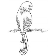 Parrot Rubber Stamp