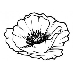 Lg Poppy Head rubber stamp by Teri Sherman