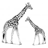 Gabby Giraffe & Calf Rubber Stamp