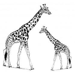 Gabby Giraffe & Calf Cling Rubber Stamp