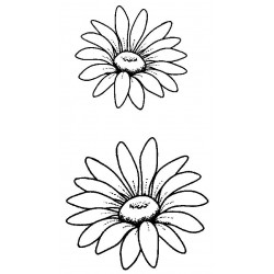 Teri's Daisies Unmounted Rubber Stamps - PRE-ORDER