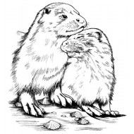 Otter Snuggles Unmounted Rubber Stamp