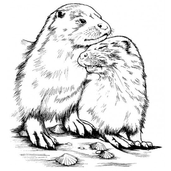 Otter Snuggles cling mounted Rubber Stamp