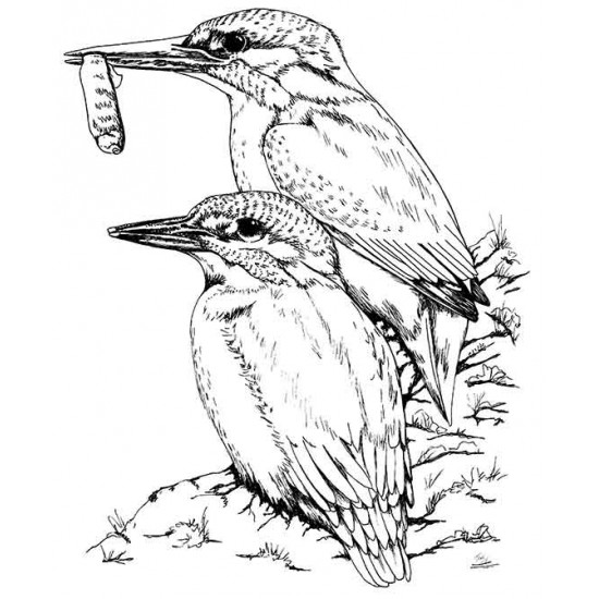 Kingfishers Unmounted Rubber Stamp